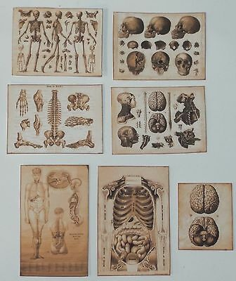 Dollhouse miniature handcrafted Antique SEPIA COLOR medical posters 1/12th scale