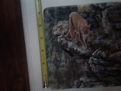 Bradford Exchange Cougar Lingers On The Edge, Cliff Dwellers Collector Plate