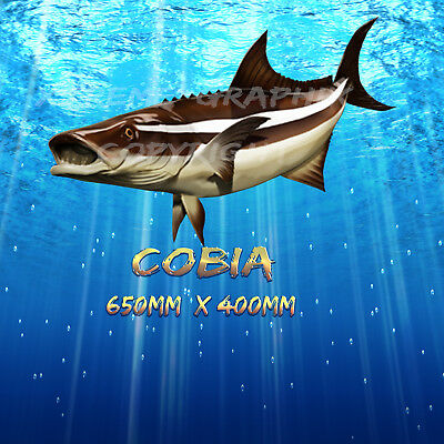 Cobia Decal Left&right 650Mm X 370Mm  Boat / Car / Truck