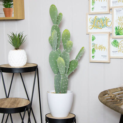 Tall flat leaf potted artificial faux cactus succulent plant gardeners gift home