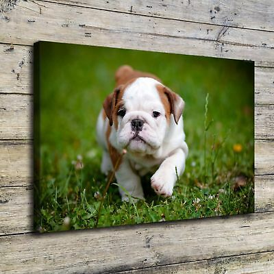 Animal Cute Dog HD Canvas prints Painting Home Decor Picture Wall art Poster