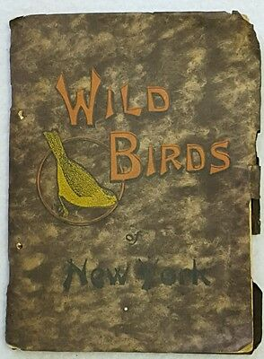 WILD BIRDS of NEW YORK 1912 Chester A Reed Softcover Book