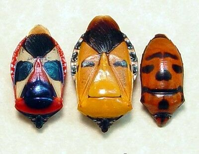 Valentine's Day Gift For Men Real Hemiptera Sp Man Face Beetle Set of 3 8221