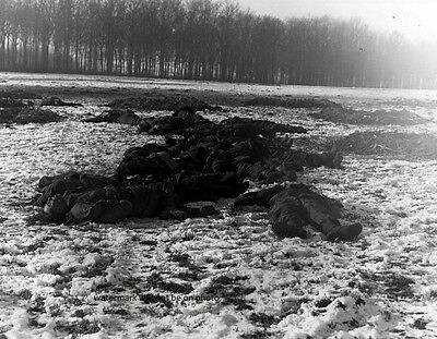 """Battle of the Bulge Dead German Soldiers 8""""x 10"""" World War II Photo Picture #172"""