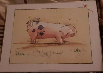 GLOUCESTER OLD SPOT PIG, ART PRINT, ' penelope pig by Kate Philp 16 x12 NEW