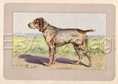 DOG English Pointer (Charles X), Rare Antique 100-Year-Old French Dog Print