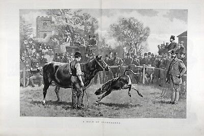 Cattle Shorthorn Calf and Heifer Auction, Huge Double-Folio 1880s Antique Print
