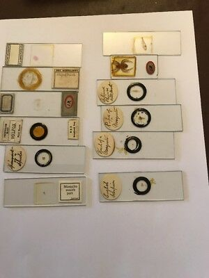 Old Mounted Slides For Microscope
