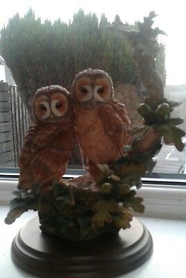 Country artists tawny owl pair in ouk tree hollow