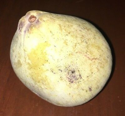 """Antique 19th Century Stone Fruit Pear 4 1/2"""" Tall and 10 1/2"""" Circumference"""