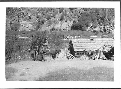 Vintage 1940 Camp 3 St Maries Idaho Forest Workers Pack Train Horses Old Photo