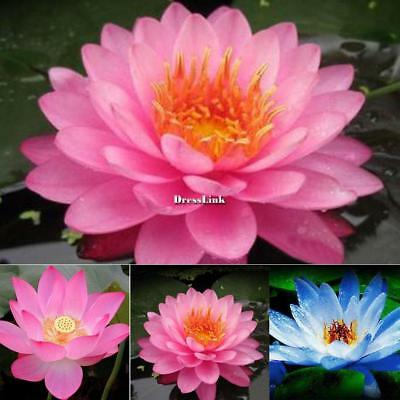 10PCS Nymphaea Herbs Water lily Seeds Bonsai Lotus Flower Garden Aquatic DL0