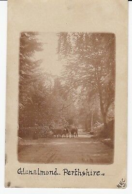 GLENALMOND Nr Perth Cows graze in lane with Cowherd Early RP Used 1905