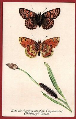 Cadbury's Cocoa Butterfly And Moth Reward Cards 1910     GLANVILLE FRITILLARY