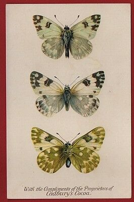 Cadbury's Cocoa Butterfly And Moth Reward Cards 1910    THE BATH WHITE BUTTERFLY