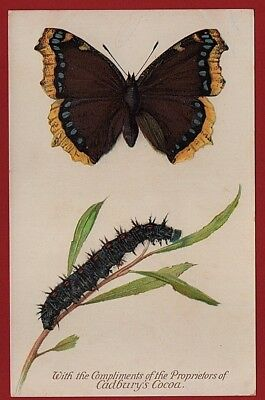 Cadbury's Cocoa Butterfly and  Moth Reward Cards 1910    THE CAMBERWELL BEAUTY