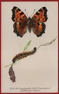Cadbury's Cocoa Butterfly & Moth Reward Card 1910 LARGE TORTOISE SHELL BUTTERFLY
