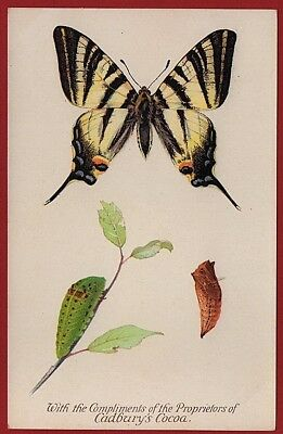 Cadbury's Cocoa Butterfly & Moth Reward Cards 1910 SCARCE SWALLOW TAIL BUTTERFLY