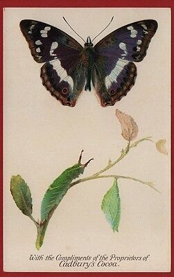 Cadbury's Cocoa Butterfly & Moth Reward Cards 1910   PURPLE EMPEROR BUTTERFLY