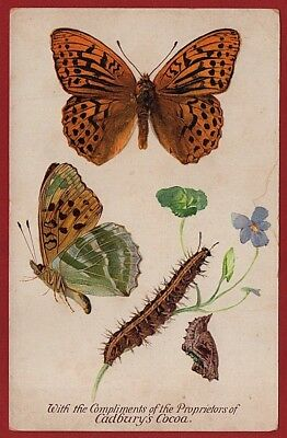 Cadbury's Cocoa Butterfly & Moth Reward Cards 1910   SILVER WASHED FRITILLARY
