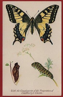 Cadbury's Cocoa Butterfly & Moth Reward Cards 1910   THE SWALLOW TAIL BUTTERFLY