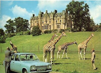 Blair Drummond: Safari Park : Giraffes & Ford Escort 1970