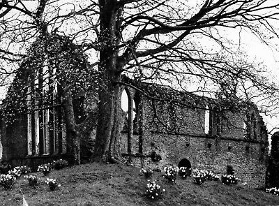 Inchmahome Priory,Lake of Menteith , Stirlingshire RP