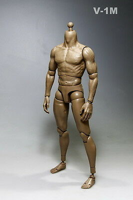 """1:6 Scale Male Muscle Body Action doll Figure  For 12"""" Hot Toys Head V-1M Model"""