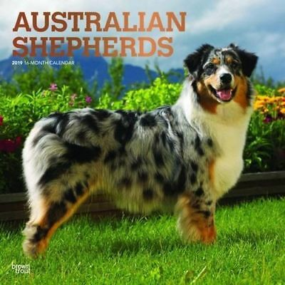 Australian Shepherds 2019 16-Month Square Wall Calendar by Browntrout FREE POST