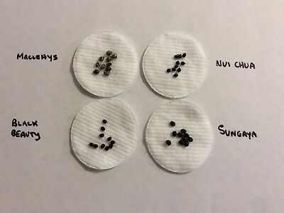 Stick Insect eggs - 6 different species - 10 eggs of each species = 60 eggs