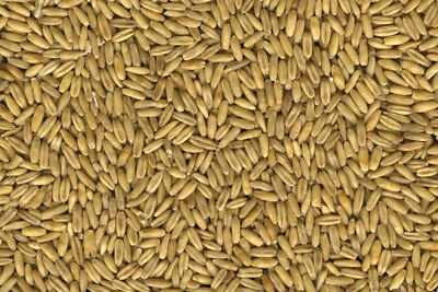 Whole Oats, Wildlife/ Deer Food Plot Seed, Oats, Whole 16-20 Lbs. FREE SHIPPING