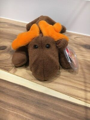 TY CHOCOLATE the MOOSE BEANIE BABY - MINT with MINT TAGS