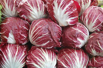 2g (approx.1300) radicchio seeds PALLA ROSSA popular Italian vegetable