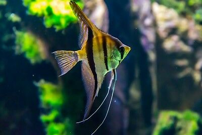 WORK FROM HOME aquarium/pets shopify dropshipping WEBSITE online business