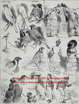 Canary & Cage Bird Show, Wren, Lovebirds, Nightingale, Large 1880s Antique Print