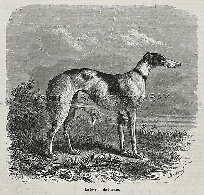 Dog Borzoi Russian Wolfhound Courser, Large 1870s Antique Print
