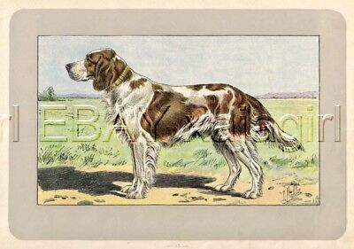 DOG Irish Red and White Setter Foundation Breed, Rare 1909 French Print