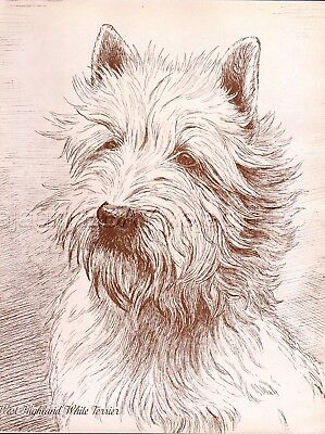 DOG West Highland White Terrier Westie, Beautiful 1930s Art Print