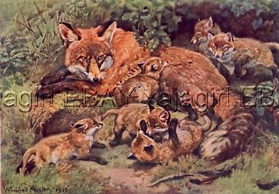 Fox & Cubs, 100 Yr Old Antique Print by Winifred Austen