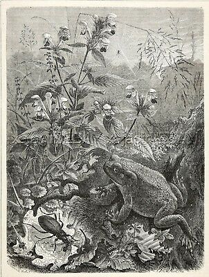 Toad in Orchid Flower Garden, Spider Beetle, Large 1870s Antique Engraving Print