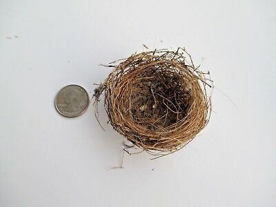 Small Round Real Bird's Nest Summer 2018 Middle Tn. - Craft, Decor, Educational