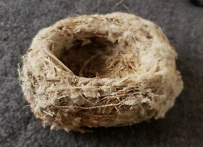 Real Abandoned Hummingbird Nest In Excellent Condition!