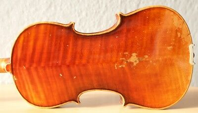 old violin 4/4 geige viola cello fiddle label POLLASTRI GAETANO