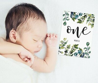 Gender Neutral Baby Milestone Cards. Eucalyptus leaves. Monthly Pack of 13 Cards