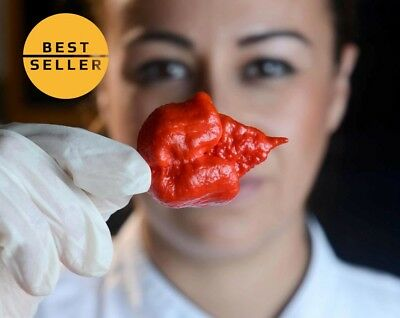 Carolina Reaper Seed Red Hot Chilli Pepper Rare Viable Seeds Extreme Hot 100 PCS
