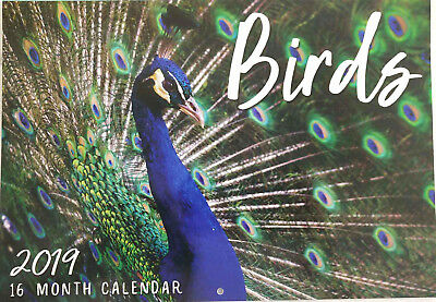 2019 Calendar Rectangle Calendar Wall Calendar 16 Months -Bird