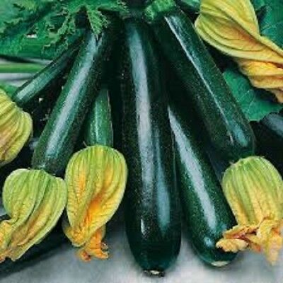Vegetable Courgette Black Beauty approx 15 Seeds Sow by 2019