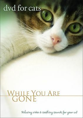 """Cat Movie - DVD FOR CATS """"While You Are Gone"""" - Cat Movie for cats NEW DVD!"""