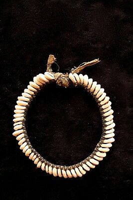 Old Cowrie Shell Necklace - Southern Highlands New Guinea 1970's