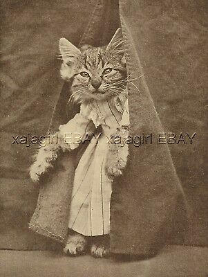 Cat Dressed Kitten Actress Actor Peeks Out of Theater Curtain, Cute 1915 Print
